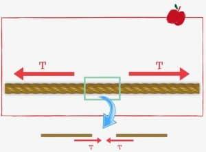 Corda ideale | Esercizi di Fisica svolti